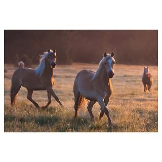 Haflinger horses in front of a morning landscape Poster