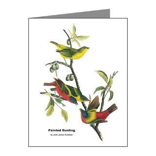 Note Cards  Audubon Painted Bunting Bird Note Cards (Pk of 20