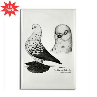 Warsaw Butterfly Pigeon : Diane Jacky On Line Catalog