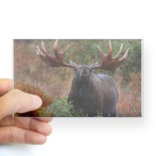 Bullwinkle Stickers  Car Bumper Stickers, Decals