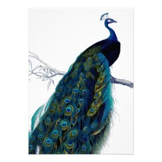 Vintage Blue Elegant Colorful Peacock Invitation