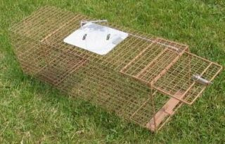 Raccoon Cat Skunk Live Animal Cage Trap Raccoon New Kage All K152 Cage