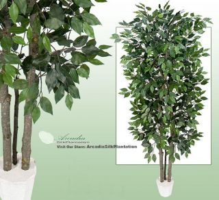 Potted Ficus Magnolia Real Wood Artificial Trees WH