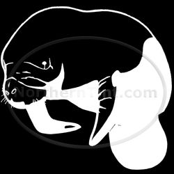 Manatee Zoo Vinyl Wall Art Car Truck Decal Sticker 154