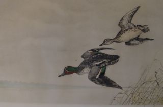 Leon Danchin Drake and Hen Mallard Etching in Colors Signed in Pencil