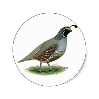 Quail: California Valley Round Sticker