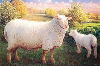 Ewe And Lamb Premium Giclee Print by James Lynch