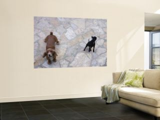 Two Dogs Barking Wall Mural by Holger Leue