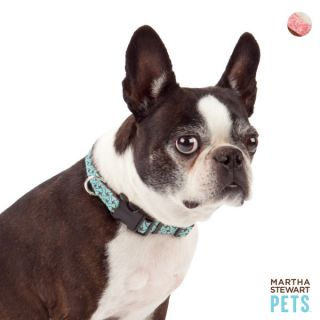 Martha Stewart™ Bone Print Dog Collar   Dog   Boutique