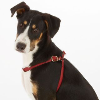 Top Paw� Monogram Collection Dog Harnesses   Harnesses   Collars, Harnesses & Leashes