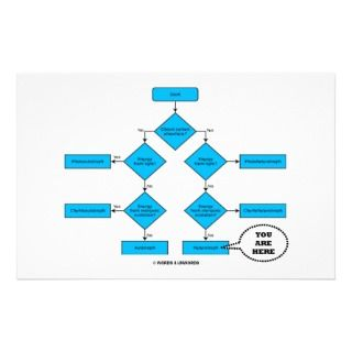 Words & Unwords: Heterotroph Flow Chart   You Are Here: