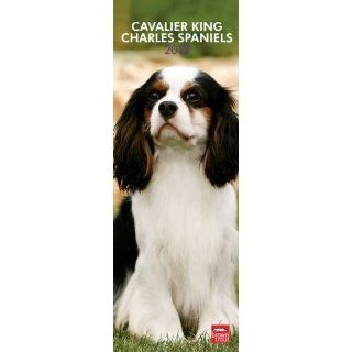 Cavalier King Charles Spaniels 2013   Original BrownTrout Kalender