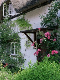 Cottage and Flowers, Wherwell, Hampshire, England, United Kingdom Photographic Print by Jean Brooks