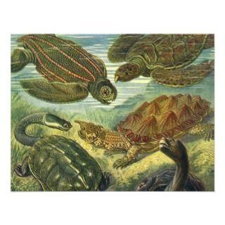 Sea Turtle Invitations, 312 Sea Turtle Announcements & Invites