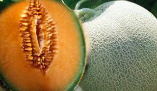 Historisches Gemüse, Hearts of Gold, Melone, #183