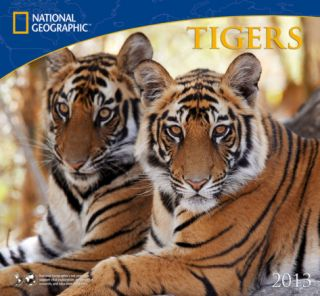 National Geographic Tigers   2013 Calendar Calendars