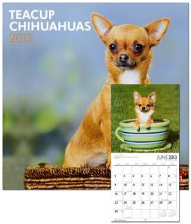 Chihuahuas, Teacup   2013 Wall Calendar Calendars