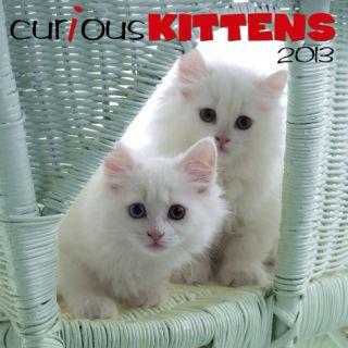 Curious Kittens   2013 Calendar Calendars