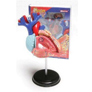 HERZ Anatomie 4D Puzzle Küche & Haushalt