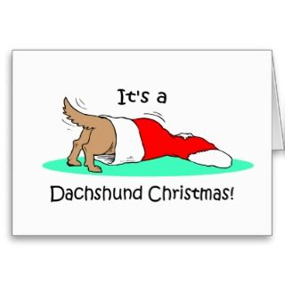 it s a dachshund christmas cute dachshund into a christmas stocking