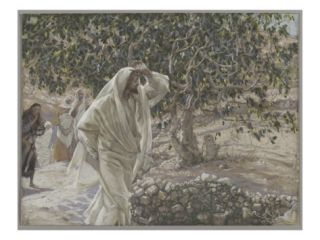 The Accursed Fig Tree, Illustration from The Life of Our Lord Jesus Christ, 1886 94 Giclee Print by James Jacques Joseph Tissot