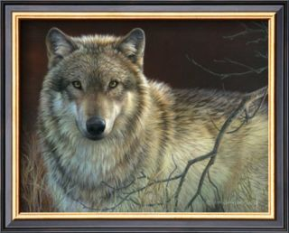 Uninterrupted Stare Gray Wolf Prints by Joni Johnson godsy