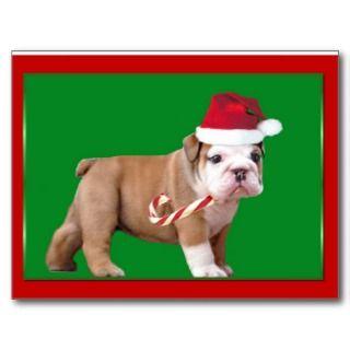 Christmas Bulldog puppy Postcards