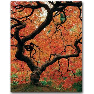 David Farley Japanese Tree I canvas art