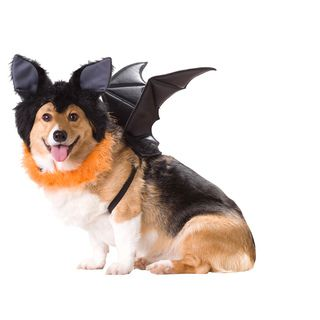 Animal Planet Bat Dog Halloween Costume